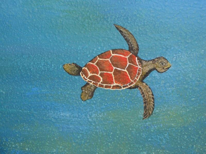 Skyler's Turtle