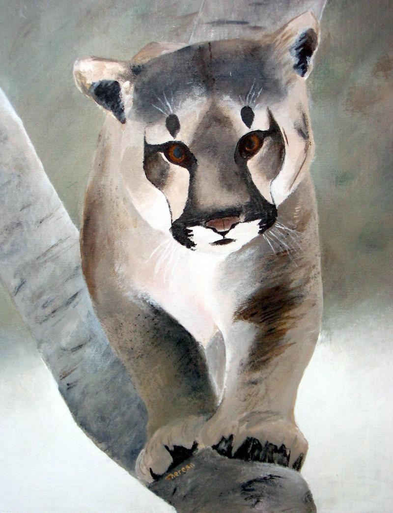 Tom's Cougar